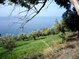 buy land with self directed 401k